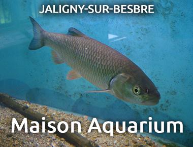 Maison Aquarium - Jaligny sur Besbre