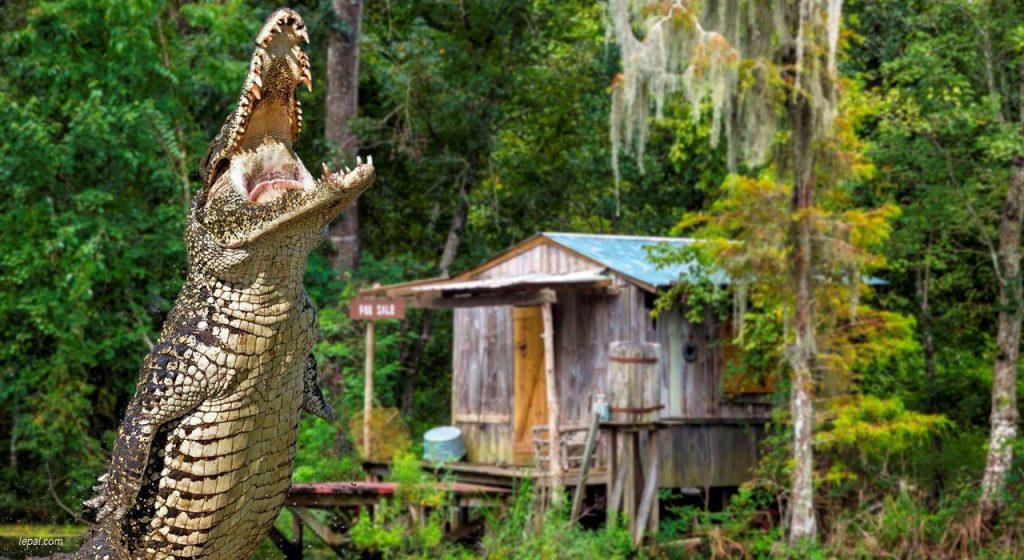 le-pal-alligator